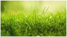 Kaip pasirūpinti veja pavasarį?
