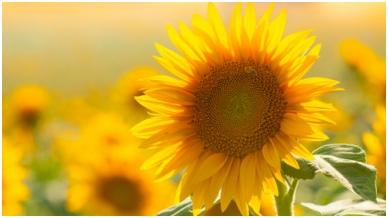 Kontrolinis sąrašas: sodo priežiūra vasaros metu