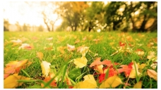 Kaip paruošti veją žiemos miegui?