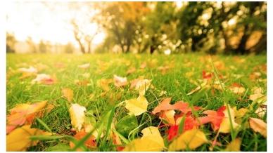 Kaip paruošti veją žiemos miegui ?